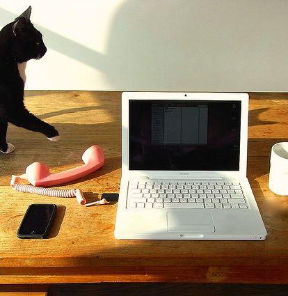 Cat Contact